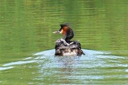 Moeders spotten vanaf het water op Moederdag