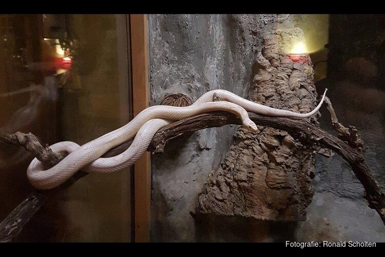 Slangen in het Streekbos met IVN